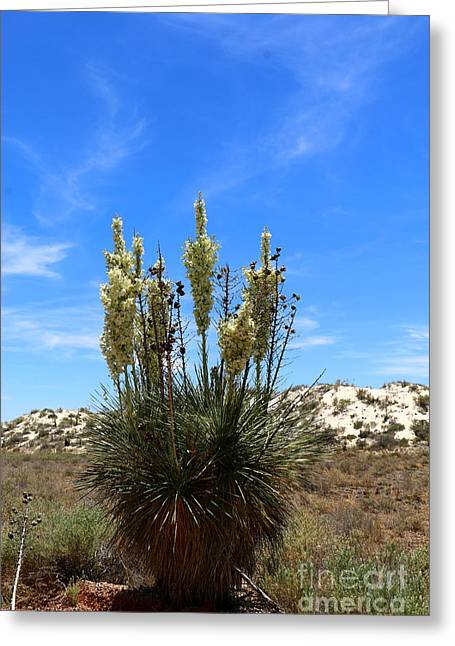 Soap Yucca At White Sands Greeting Card by Christiane Schulze Art And Photography