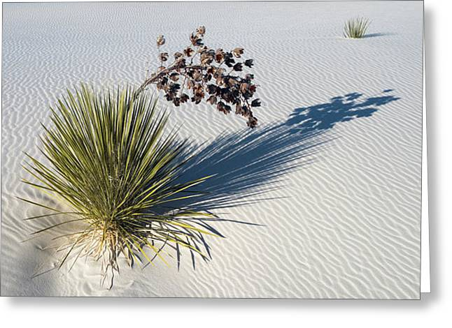 Soaptree Yucca Yucca Elata At Sand Greeting Card