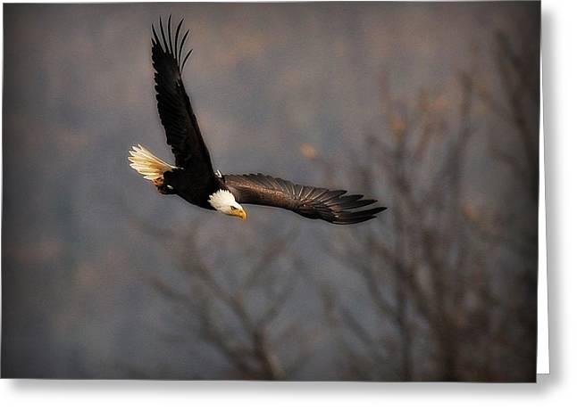 Soar Like An Eagle Greeting Card by Angel Cher
