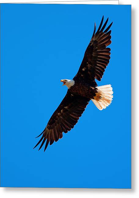 Greeting Card featuring the photograph Soaring by Aaron Whittemore