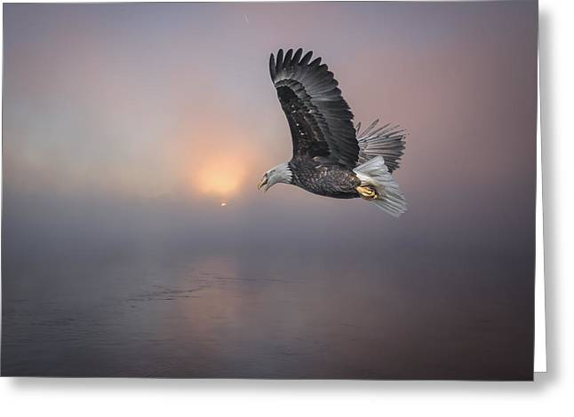 Soaring At Sunrise Greeting Card by Thomas Young