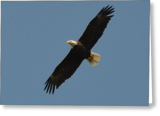 Soaring Bald Eagle Greeting Card by Jeff at JSJ Photography