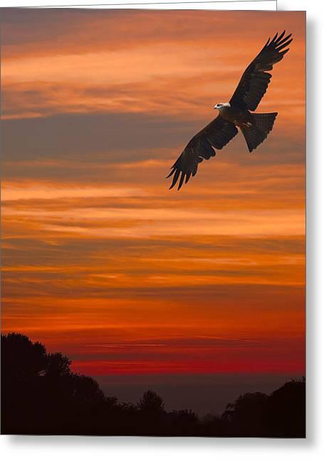 Soaring Bird Of Prey Greeting Card by Daniel Hagerman