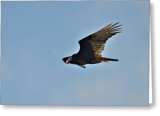 Greeting Card featuring the photograph Soaring by David Porteus