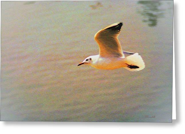 Soaring Gull Greeting Card by Dennis Lundell