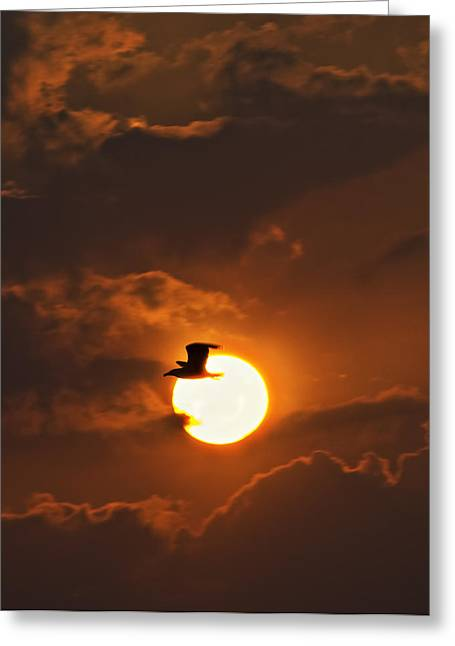 Soaring In The Sun Greeting Card by Tony Reddington
