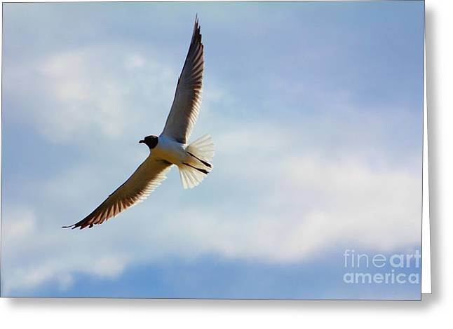 Greeting Card featuring the photograph Soaring by Laurinda Bowling