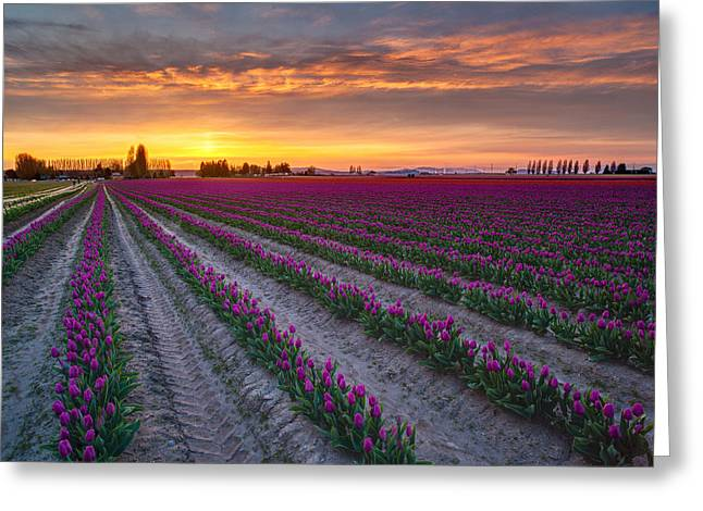Soaring Magenta Fields Greeting Card