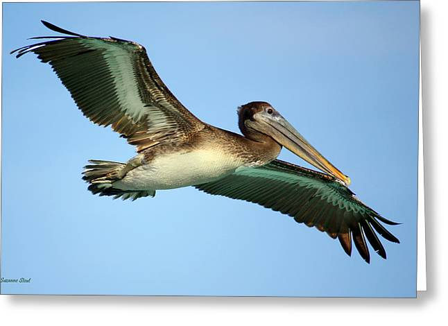 Greeting Card featuring the photograph Soaring Pelican by Suzanne Stout