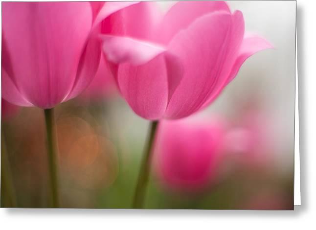 Soaring Pink Tulips Greeting Card