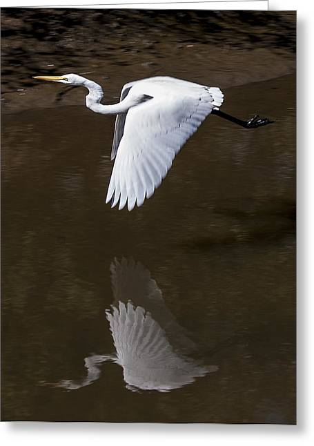 Greeting Card featuring the photograph Soaring Reflection by Paula Porterfield-Izzo