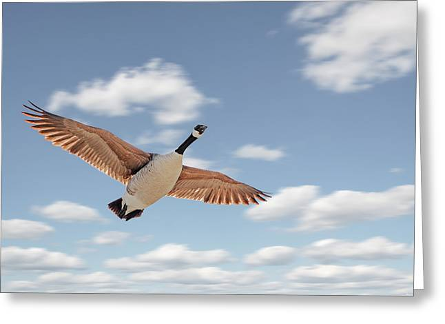 Soaring Greeting Card by Steven  Michael