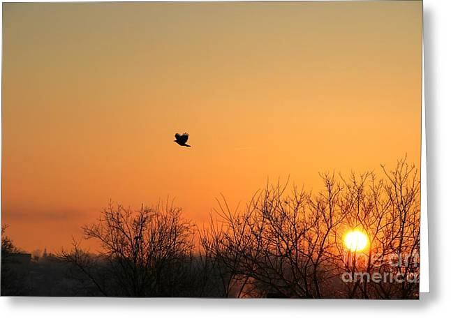 Soaring Sunrise 1 Greeting Card by Jay Nodianos