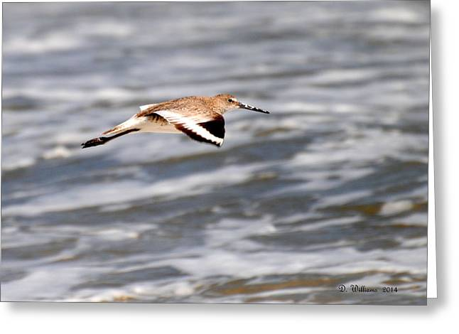 Soaring Willet Greeting Card