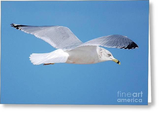 Soaring  Greeting Card by William Wyckoff