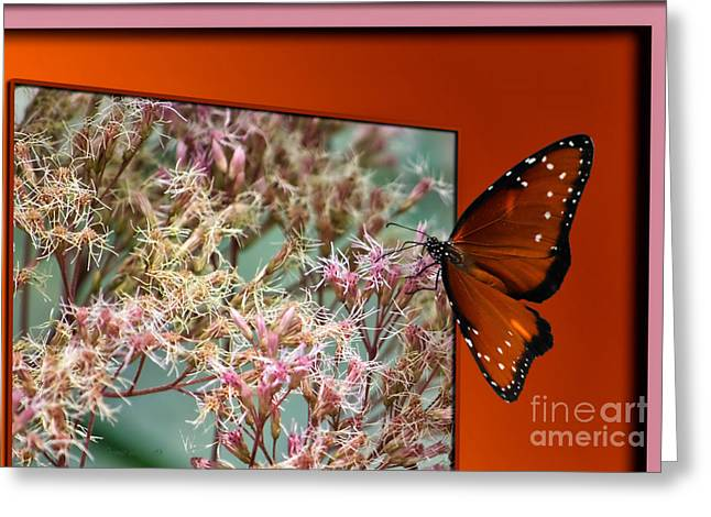 Social Butterfly 03 Greeting Card by Thomas Woolworth