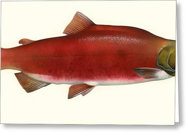 Sockeye Salmon Greeting Card by Mountain Dreams