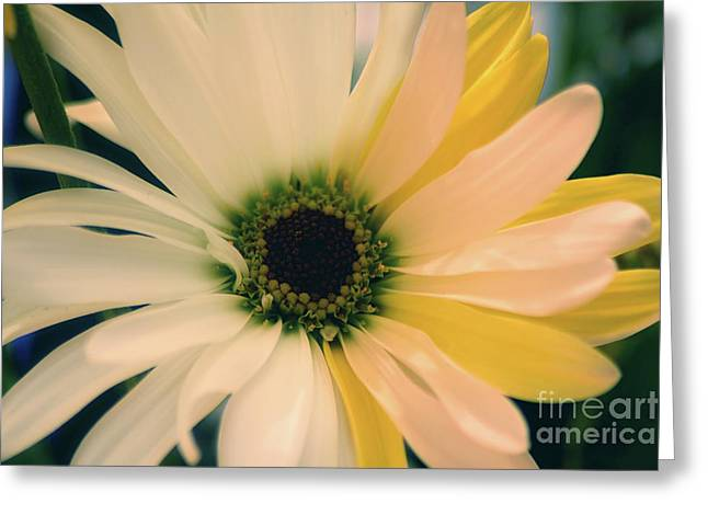Greeting Card featuring the photograph Soft by Adrian LaRoque