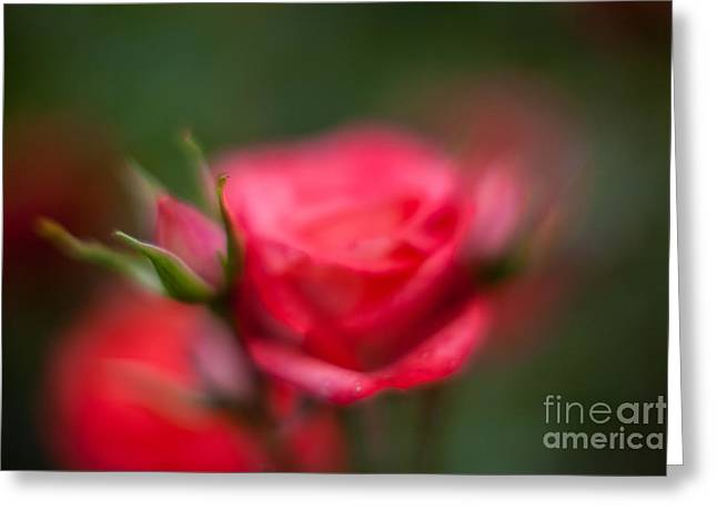Soft And Peaceful Greeting Card by Mike Reid