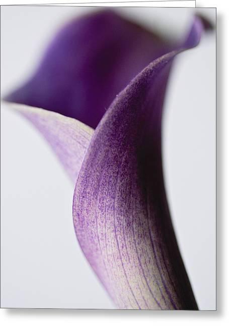 Soft And Sweet Greeting Card by Christi Kraft