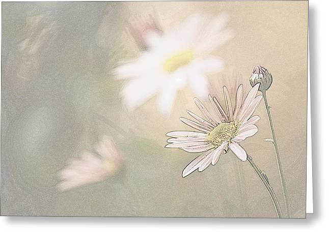 Soft Aster Greeting Card
