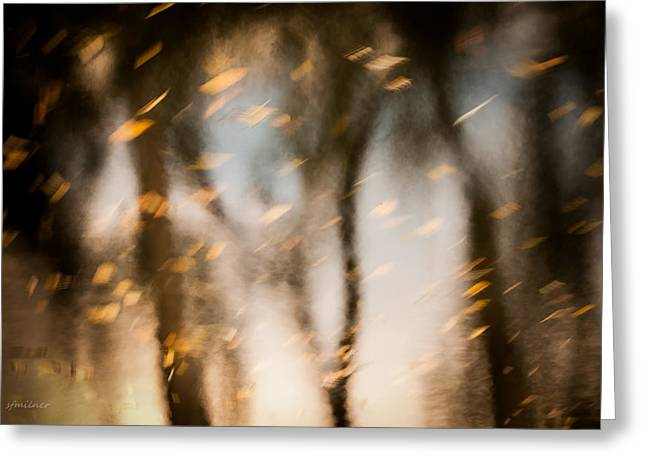 Soft Autumn Greeting Card by Steven Milner
