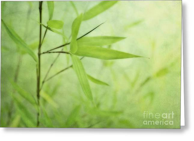 Soft Bamboo Greeting Card by Priska Wettstein
