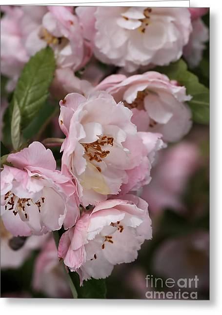 Soft Blossom Greeting Card