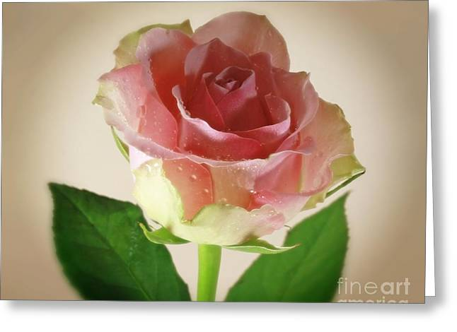 Soft Caress Raindrops On Roses Greeting Card by Inspired Nature Photography Fine Art Photography