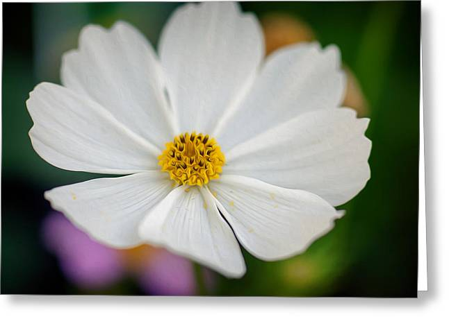 Soft Color Flower Art Greeting Card by Tammy Smith