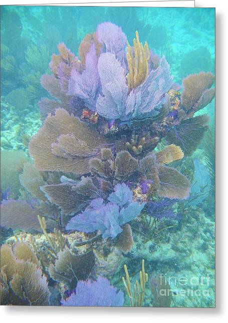 Soft Coral Greeting Card by Adam Jewell