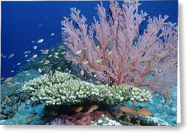 Soft Coral And Reef Fish Greeting Card by Andrew J. Martinez