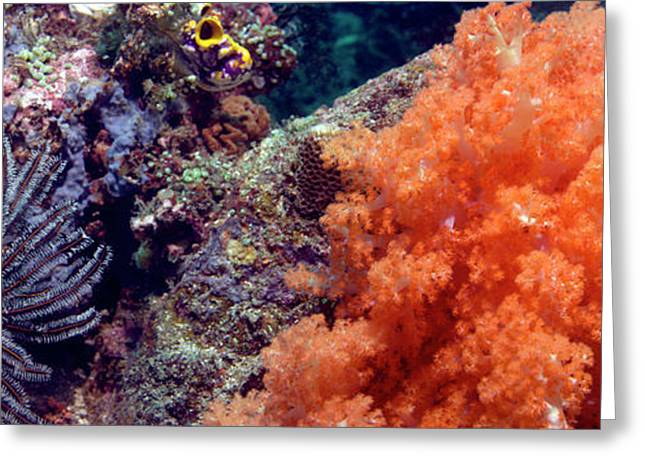Soft Corals And Feather Stars Greeting Card