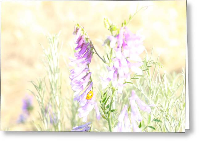 Soft Desert Flower Greeting Card