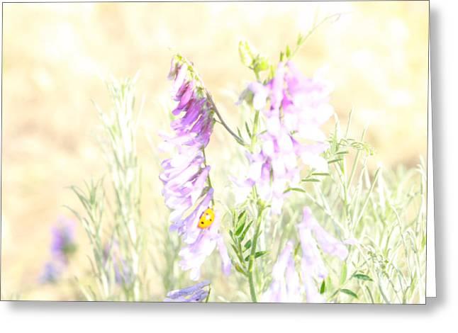 Soft Desert Flower Greeting Card by Rich Collins