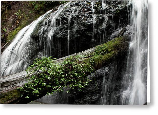 Soft Falls Of Mendocino Greeting Card by Lorraine Devon Wilke