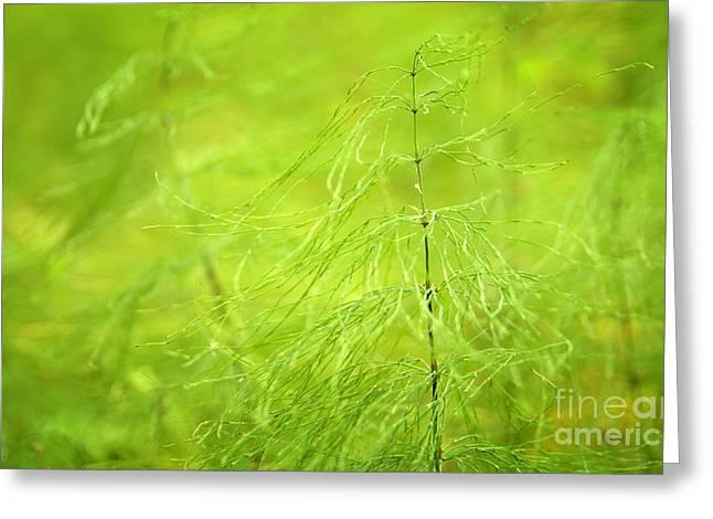 Soft Green Wildflower Greeting Card by Jolanta Meskauskiene