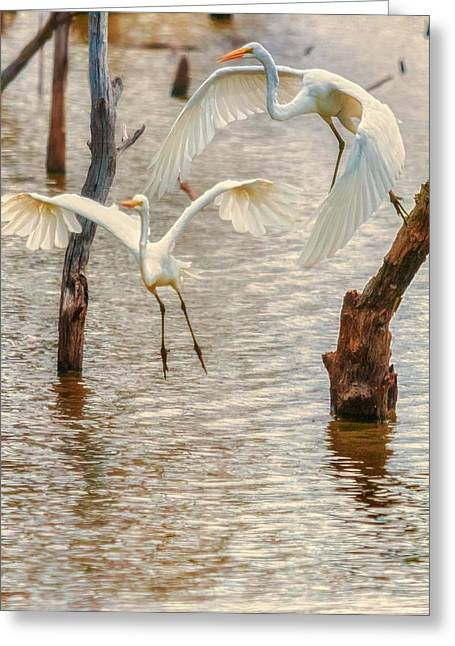 Soft Landing Two Egrets Greeting Card