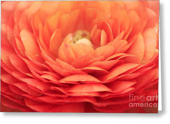 Soft Layers Greeting Card by Darren Fisher