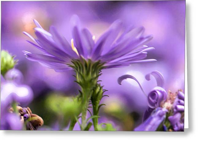 Soft Lilac Greeting Card by Leif Sohlman