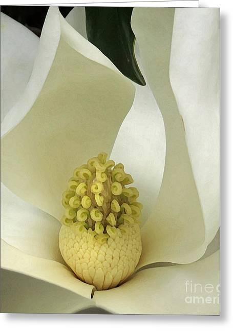 Soft Magnolia Grandiflora Greeting Card
