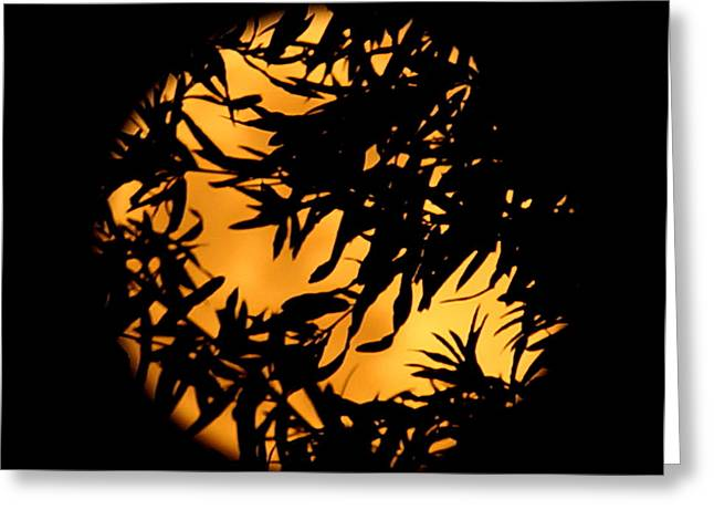 Greeting Card featuring the photograph Soft Moon Silhouette by Chris Fraser