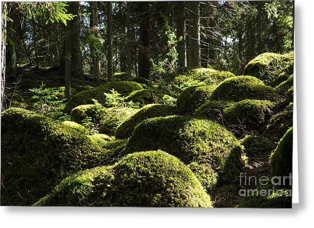 Greeting Card featuring the photograph Soft Mossy Rocks by Kennerth and Birgitta Kullman