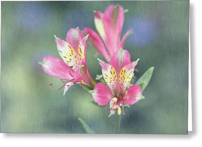 Soft Pink Alstroemeria Flower Greeting Card