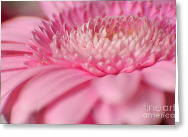 Soft Pink Gerbera Daisy Greeting Card