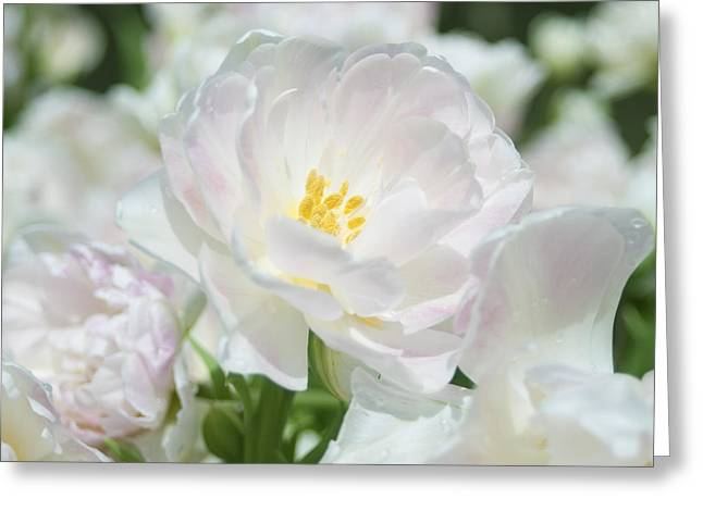 Greeting Card featuring the photograph White Flower Is Beautiful by Haleh Mahbod