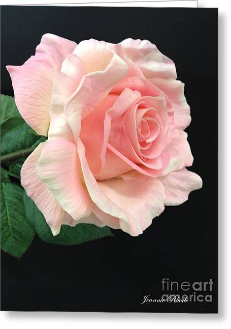 Greeting Card featuring the photograph Soft Pink Rose 1 by Jeannie Rhode