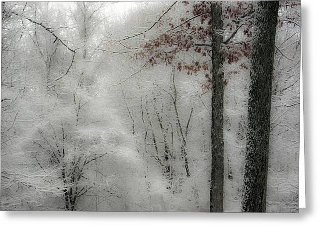 Soft Snow Greeting Card by Nancy De Flon