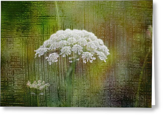 Soft Summer Rain And Queen Annes Lace Greeting Card by Suzanne Powers
