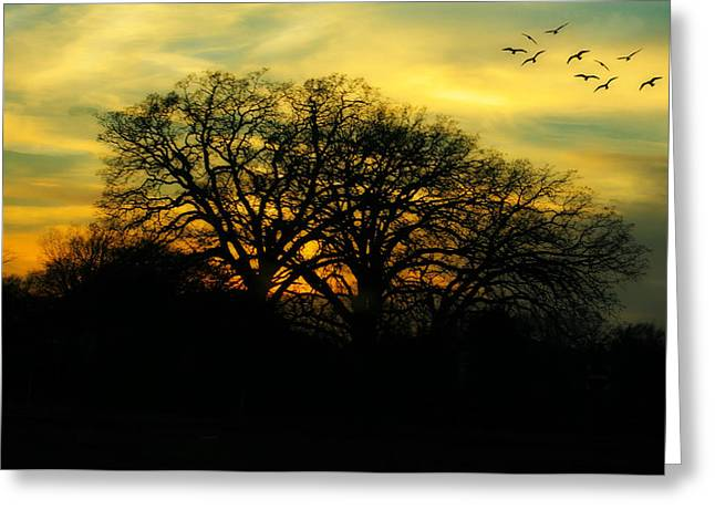 Soft Sunset Greeting Card by Joan Bertucci
